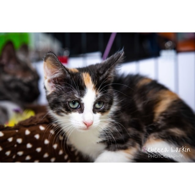 Photo of Kipling