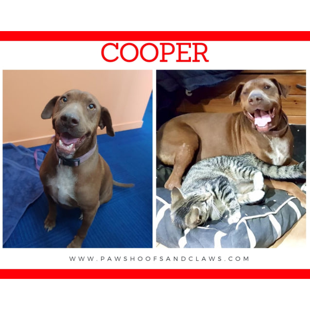 Photo of Cooper (Red)
