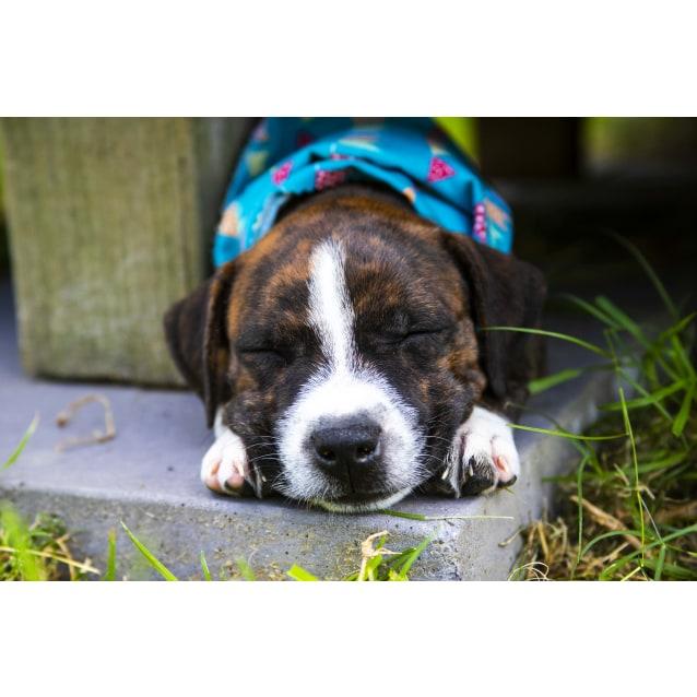 Photo of April ~ Cuddly Staffy X Puppy