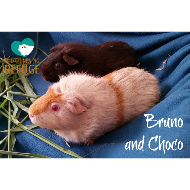 Photo of Bruno And Choco