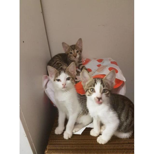 Photo of Kittens Galore