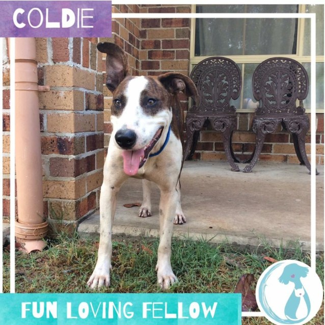 Photo of Coldie