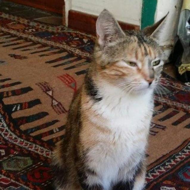 Photo of Henrietta