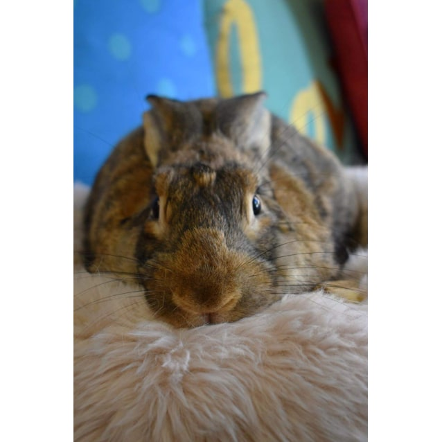 Photo of Pumbaa