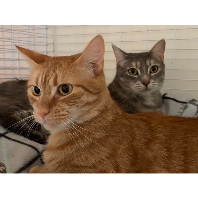Photo of Tigerlilly & Ginny