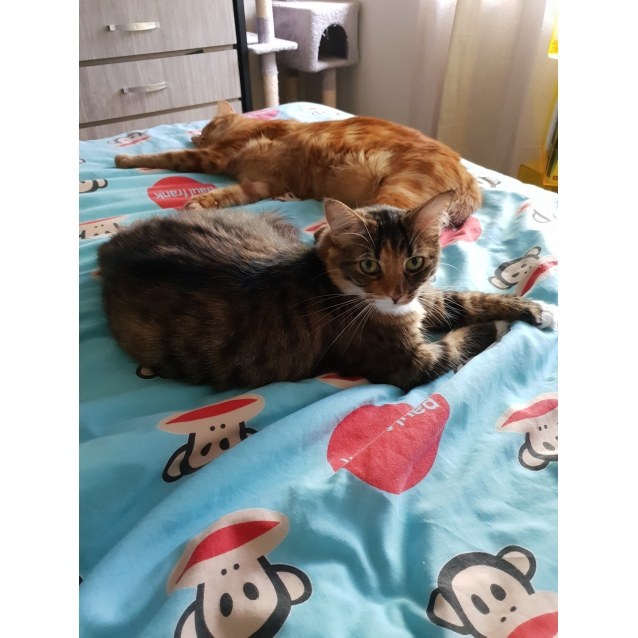 Photo of Elle And Jaffa