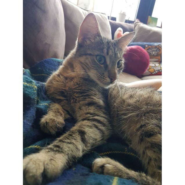 Photo of Missy (Located In Rowville)