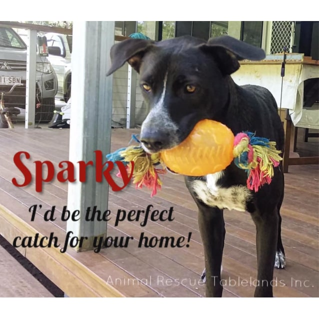 Photo of Sparky
