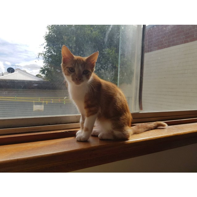 Photo of Spike (Located In Sandringham)