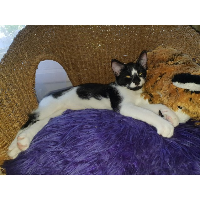 Photo of Sampson (Located In Ringwood East)