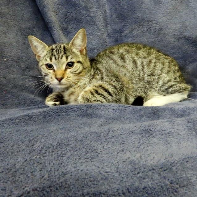 Photo of Saffie