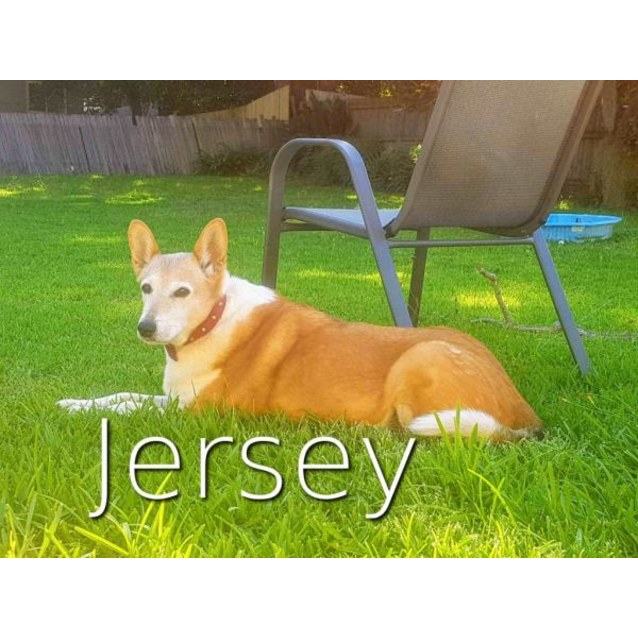 Photo of Bella And Jersey