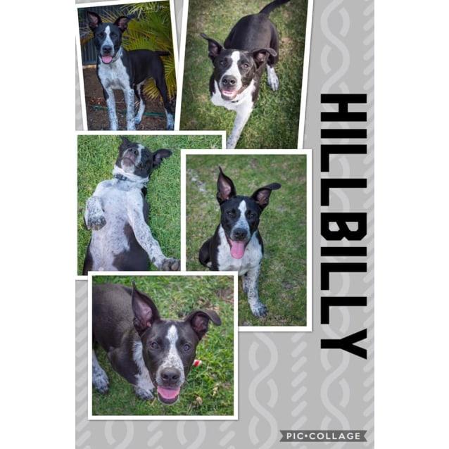 Photo of Hillbilly