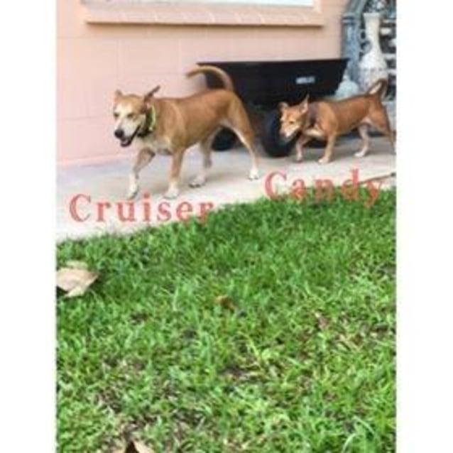 Photo of Cruiser