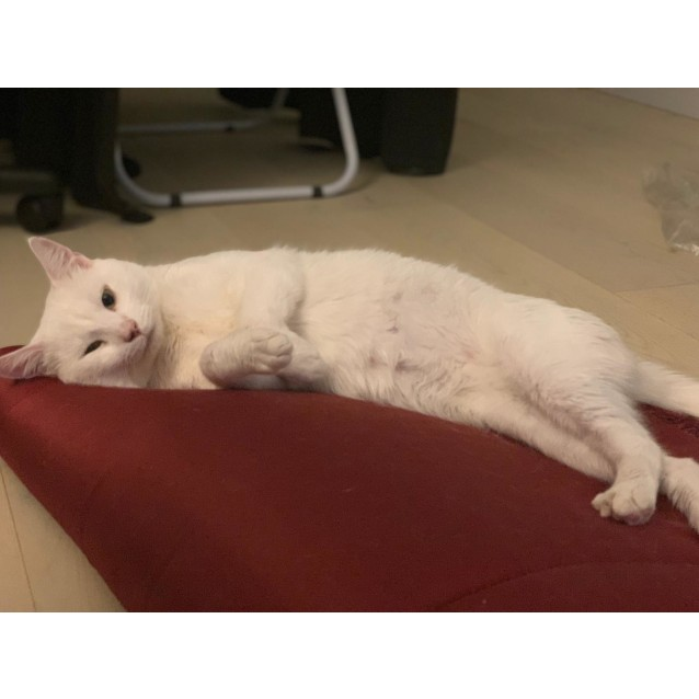 Photo of Salty (Located In Moonee Ponds)