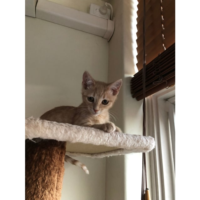 Photo of Taco (Located In Armadale)