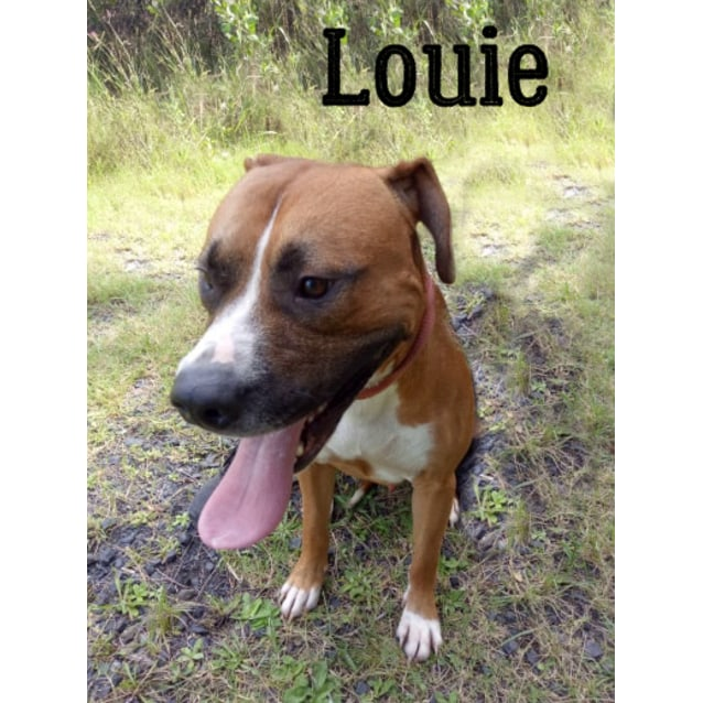 Photo of Louie
