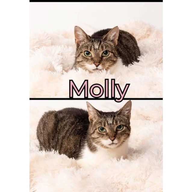 Photo of Molly