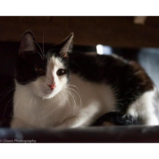 Photo of Bronwen
