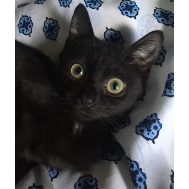 Photo of Baby The Most Affectionate Kitten