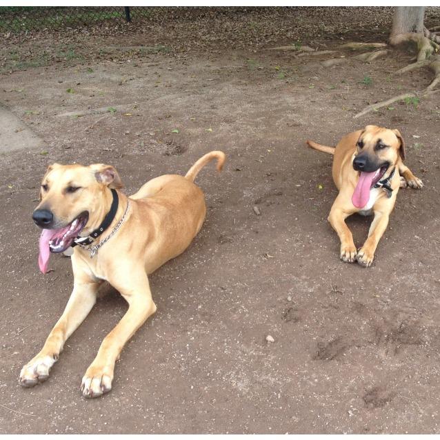 Photo of Genna & Django