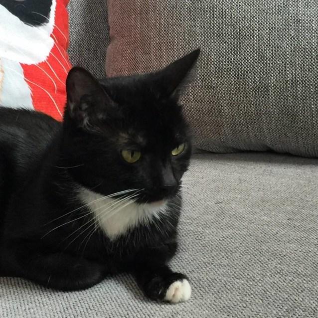 Photo of Sheila   Meet Me At Cat Lounge/Neko Hq In Preston