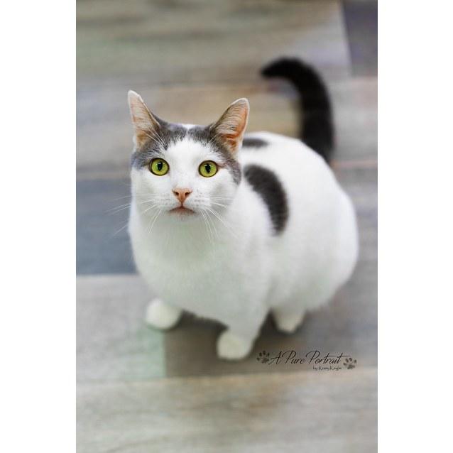 Photo of Mitchell   Meet Me At Cat Lounge Neko Hq Preston