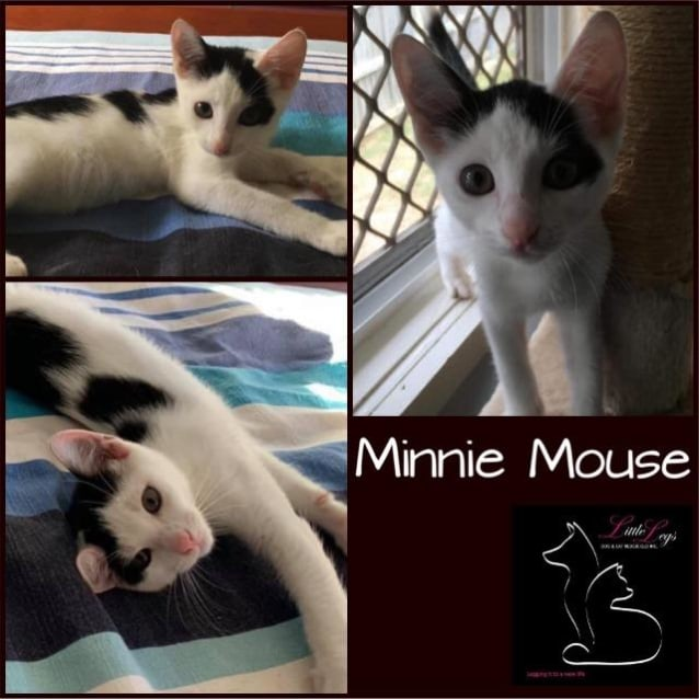 Photo of Minnie Mouse