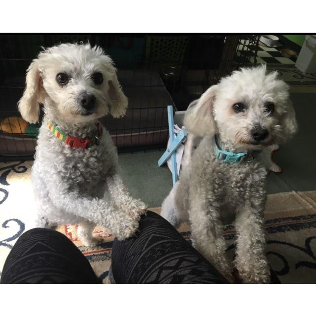 Photo of Bella And Lulu
