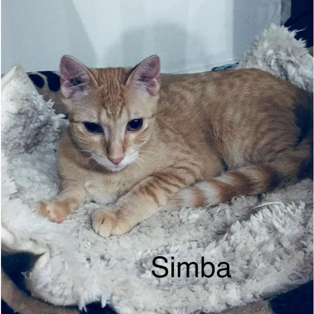 Photo of Simba