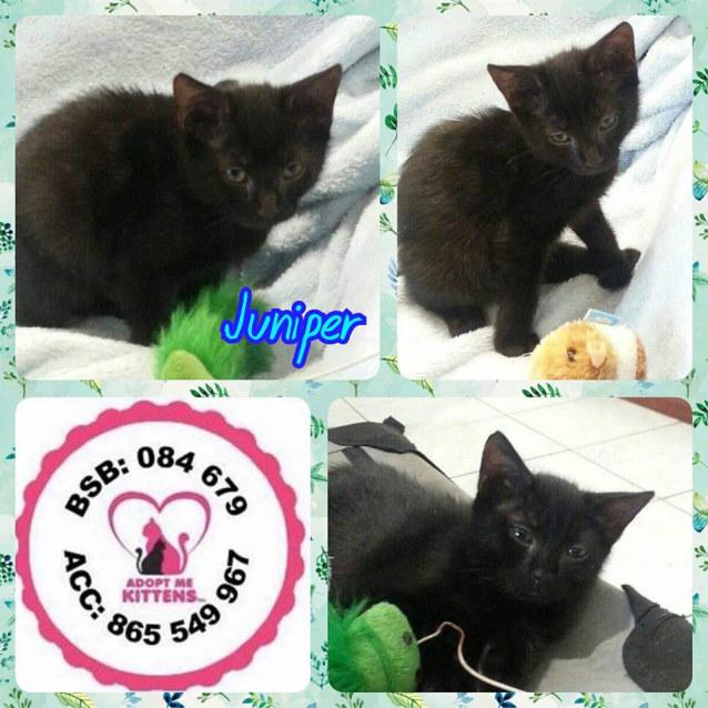 Photo of Juniper