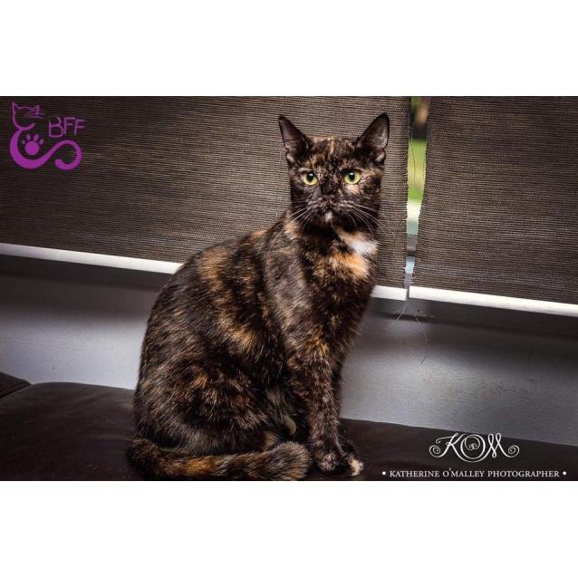 Photo of Freya