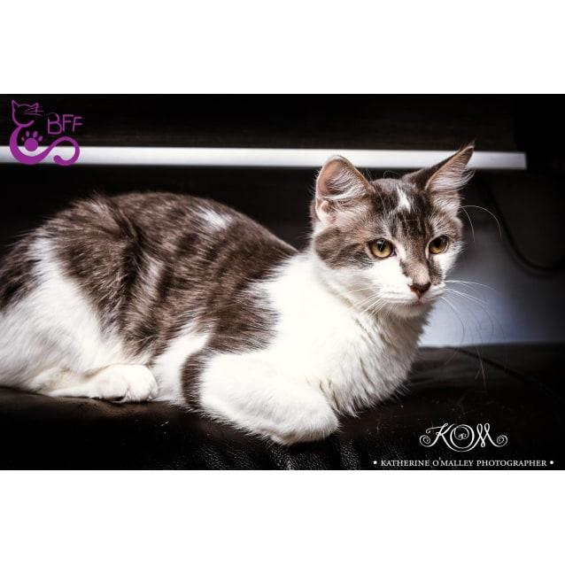 Photo of Neko