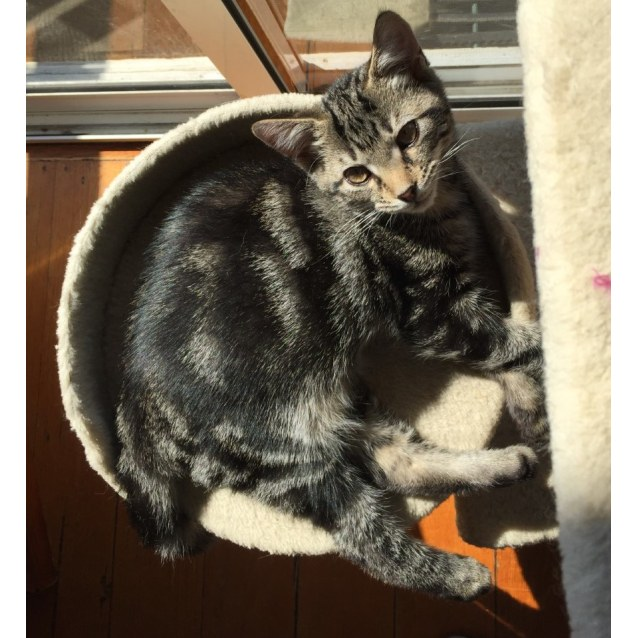 Photo of Jack ^^Dandy Cat Rescue^^