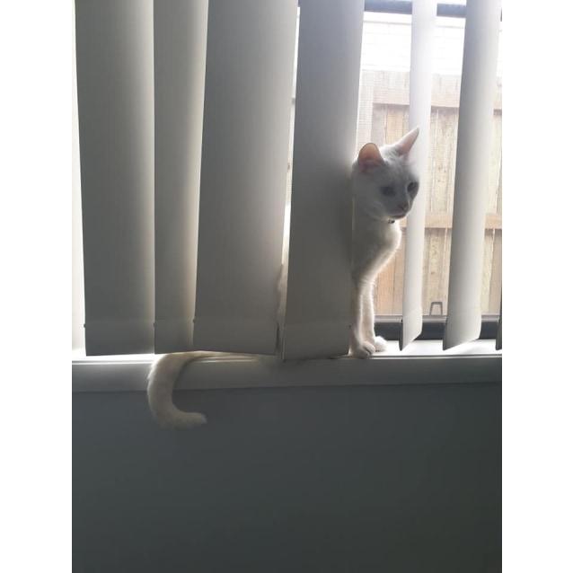 Photo of Elsa