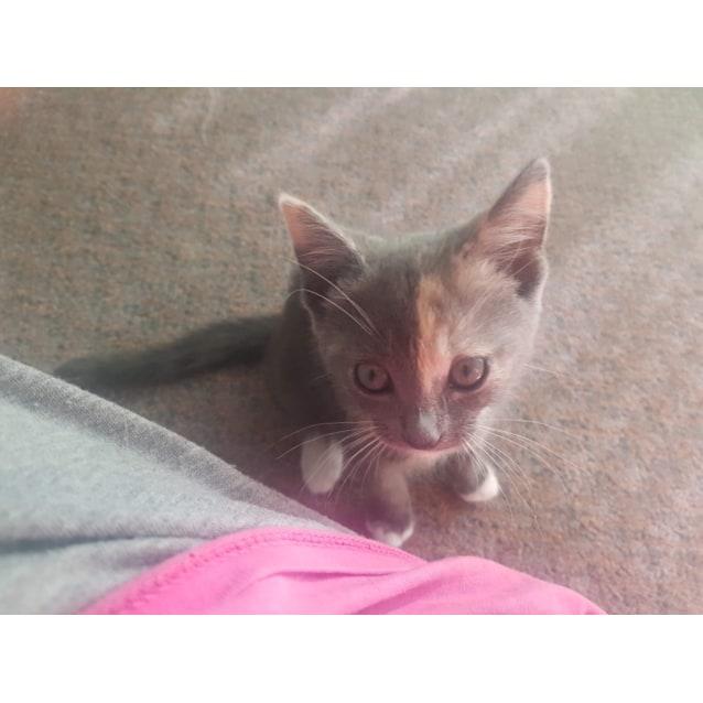 Photo of Jerzey