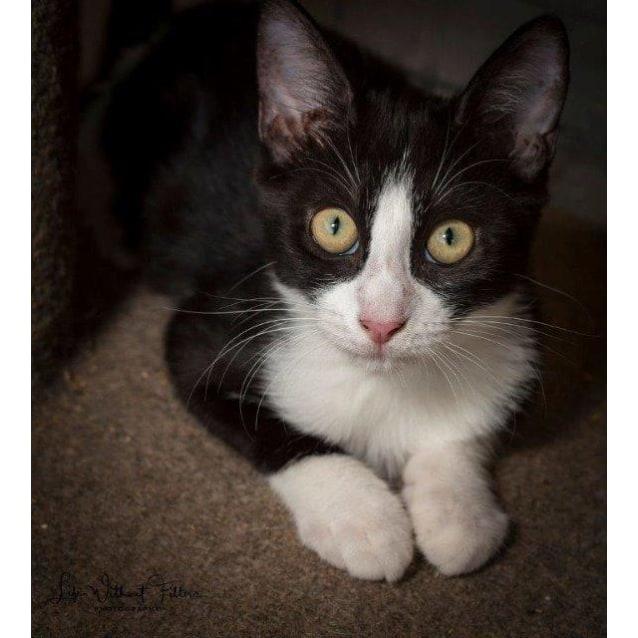 Photo of Allira