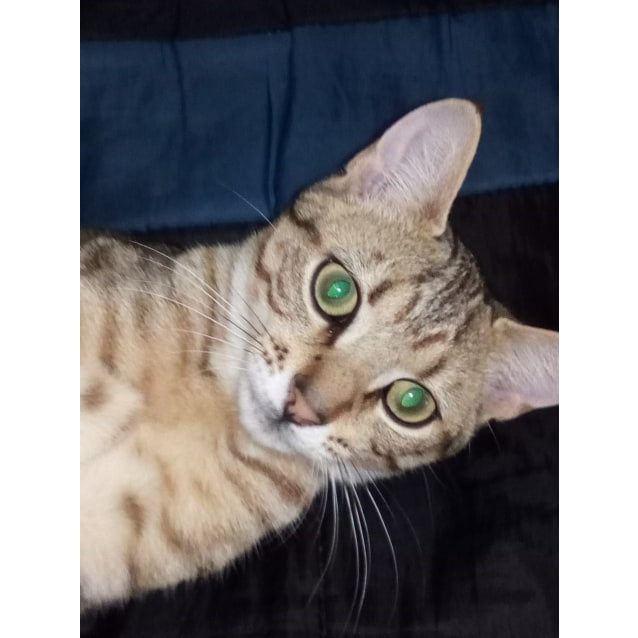 Photo of Tigs (Located In Doveton)
