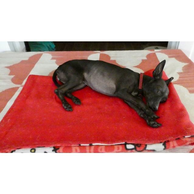 Photo of Layla (Adoption Pending)