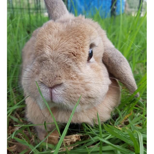 Photo of Huckleberry