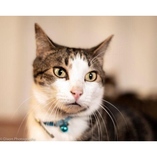 Photo of Julius