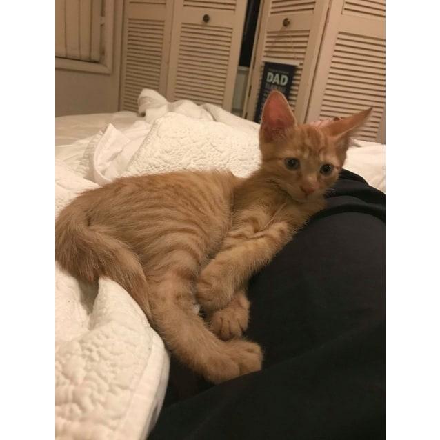 Photo of Vinny