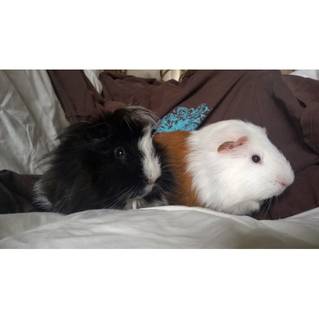 Photo of Merry And Pippin