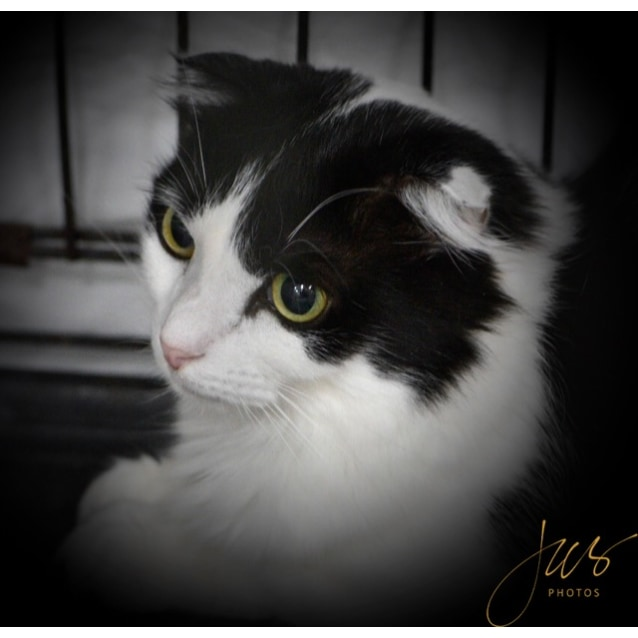 Photo of Isabella **On Trial With My New Family**