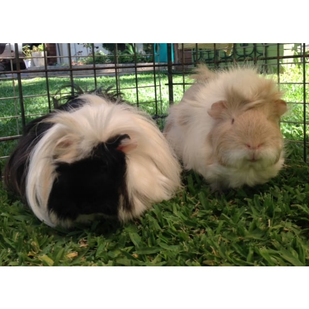 Photo of Honey & Oreo  ** On Trial With My New Family *