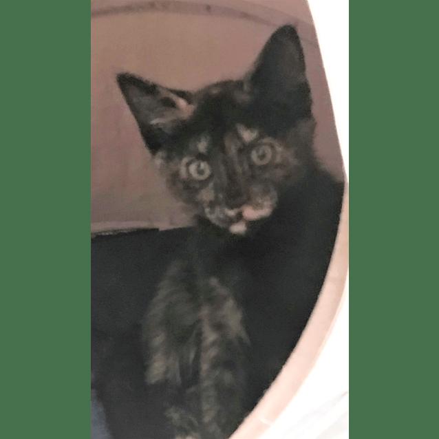 Photo of Zelda