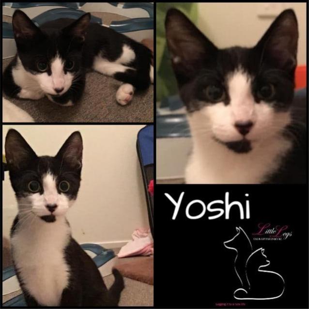 Photo of Yoshi