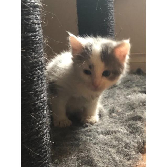 Photo of Sabrina