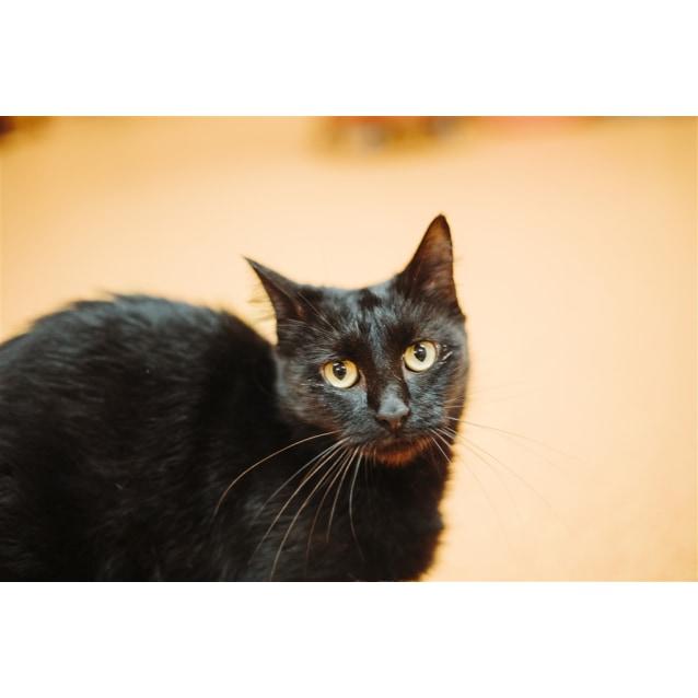Photo of Delilah