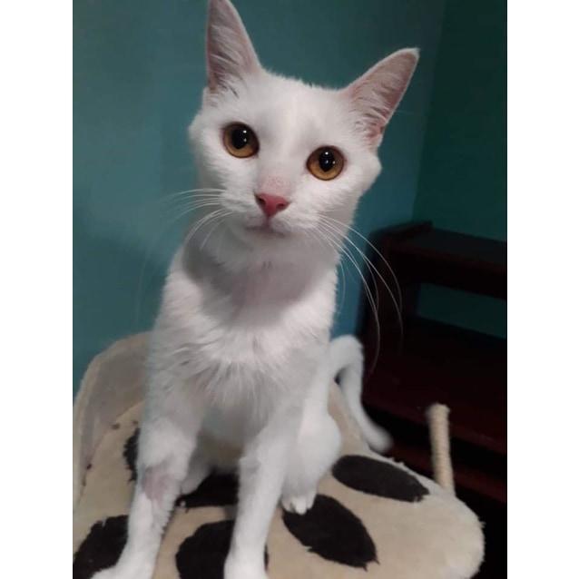 Photo of Tayet